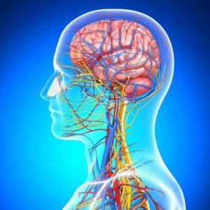 kak-vosstanovit-nervnuju-sistemu